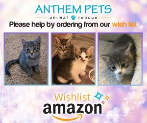 Amazon Wish Kitten 2