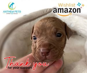 Amazon Wish Puppy