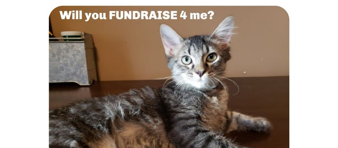 Fundraise 2