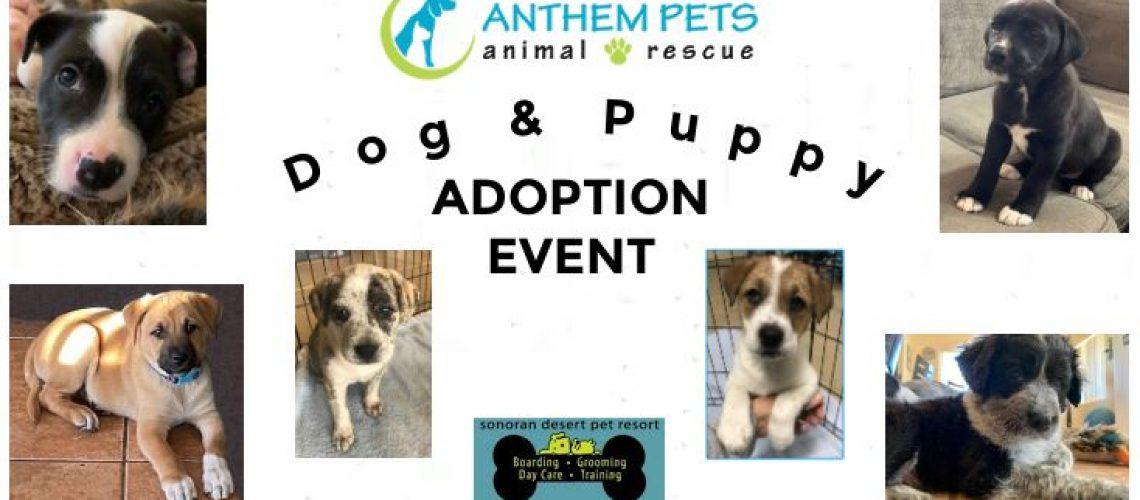 Puppy Collage Feb 21 (2)